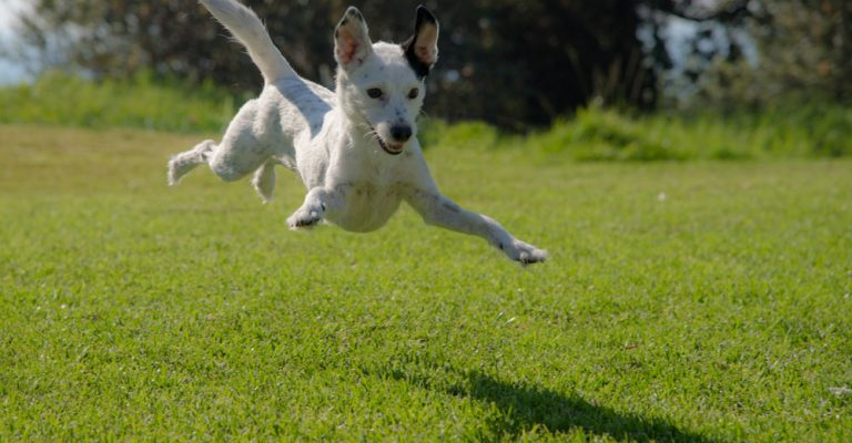 Dog Walking and Exercise | Game Time Dog Services | Austin, TX