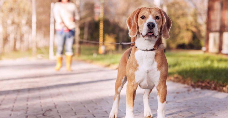 Dog Walker | Game Time Dog Services | Austin, TX
