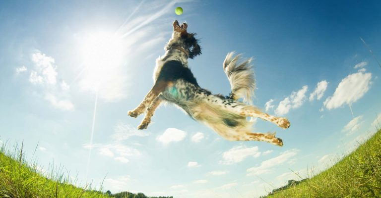 Dog Exercise | Game Time Dog Services | Austin, TX